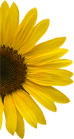 Sunflower Header Image